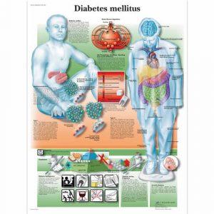 Diabetic Teaching Tools